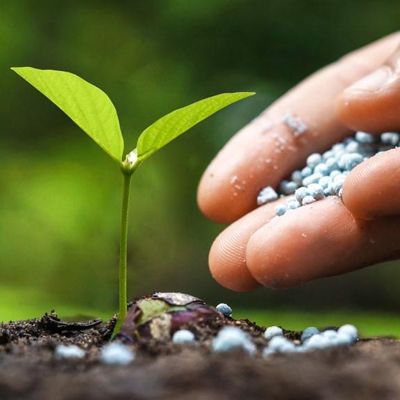 野菜の栽培に欠かせない追肥とは? 成長に合わせて適切な肥料の選択を