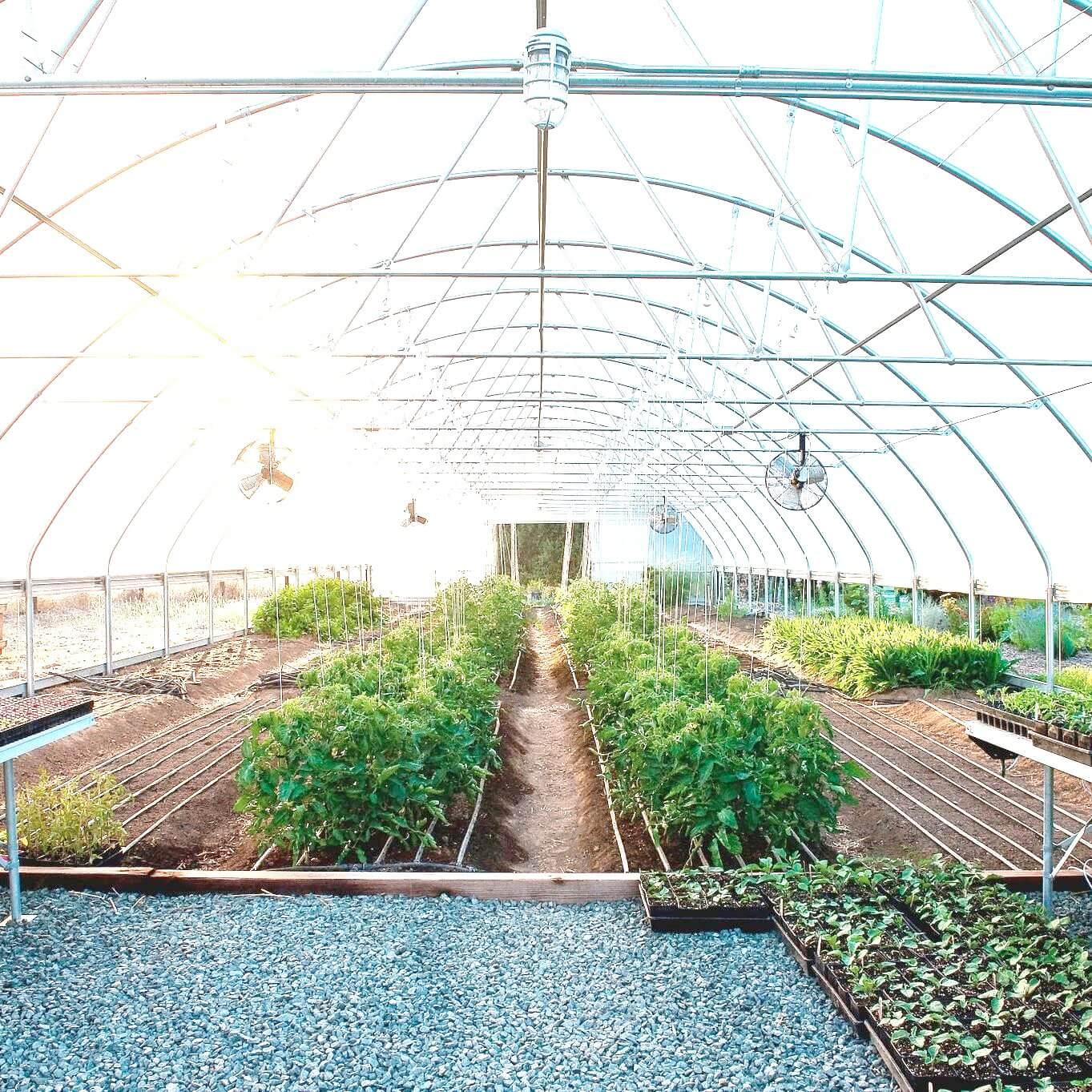ビニールハウス栽培で温度を管理するには? 作物に合った環境づくりを