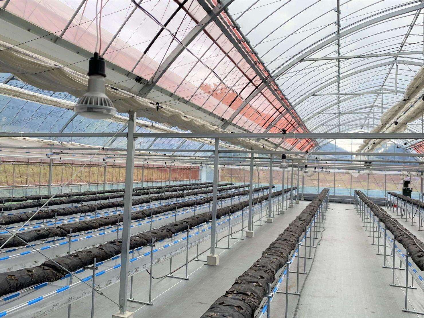 導入事例:農業用LED電球(イメージ)