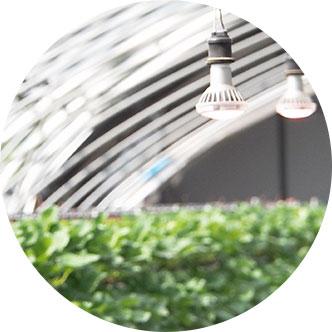 いちご用LED電球・農業用LED電球(イメージ)