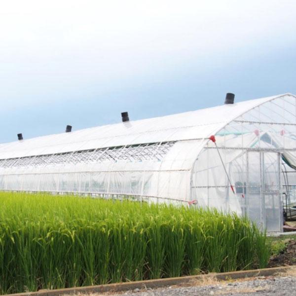 農業用ハウスのメリットとは? 作物に適切な環境を整える設備の選び方