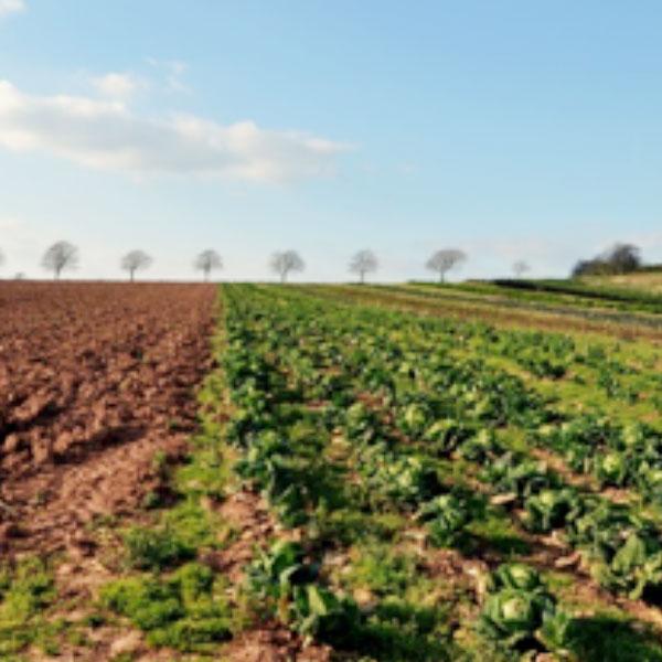 農業で儲かる作物を選ぶポイントとは? 利益拡大のための考え方