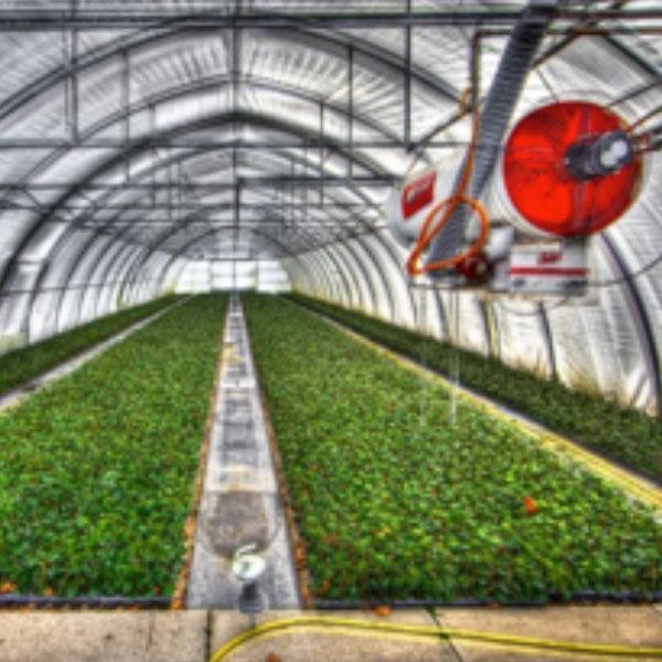 ビニールハウス栽培における湿度管理の方法│作物が育ちやすい環境に