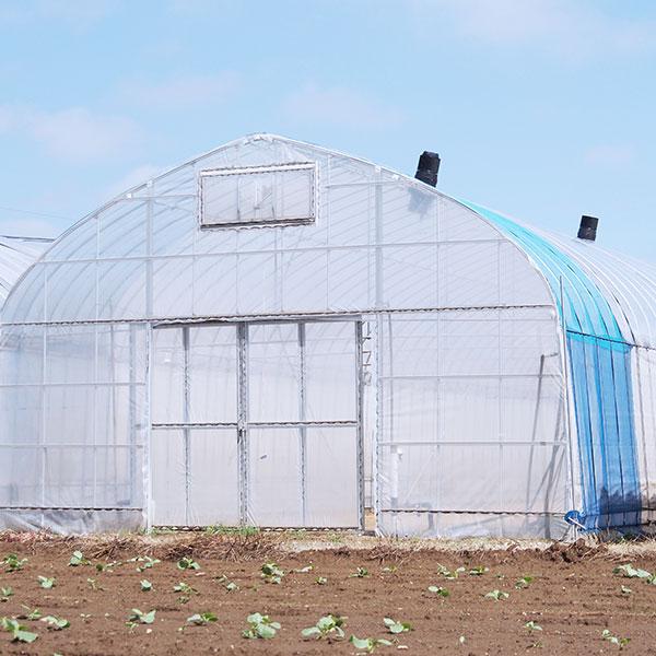 ビニールハウス栽培と空動扇の相性