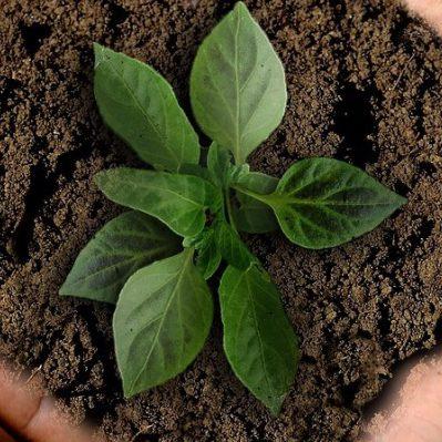 植物に与える肥料の基礎知識|作物の成長を促進させる使い方とは?