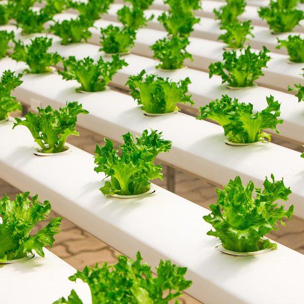 養液栽培で効率的な農業を実現|品質と収穫量の安定を目指すためには