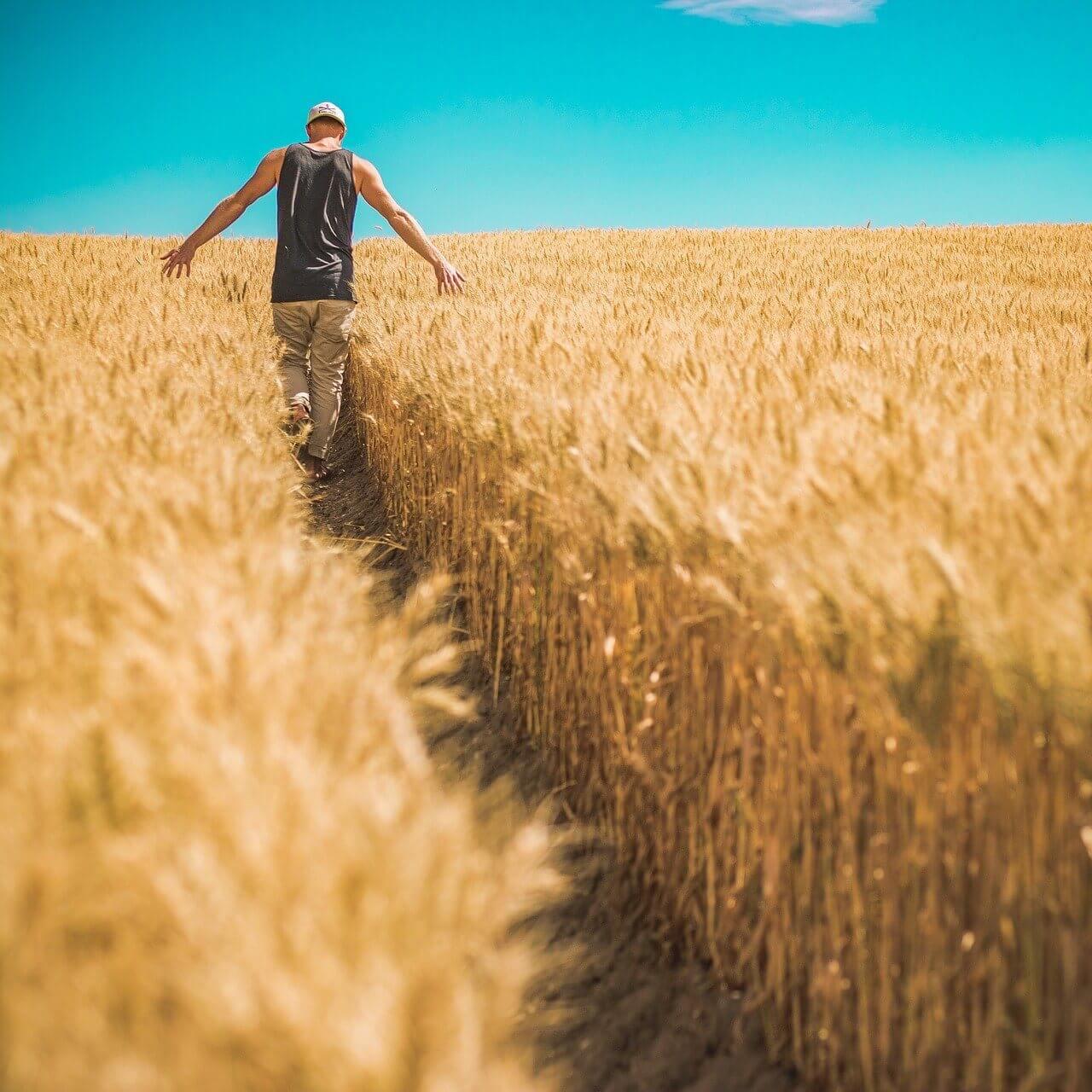 農業補助金とは?就農者の自立・事業拡大を後押しする支援制度の特徴