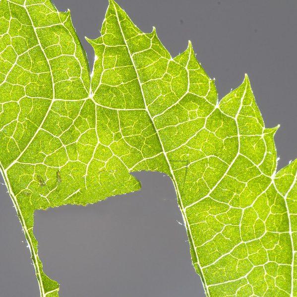 ヨトウムシの被害から作物を守るには?予防や駆除におすすめの設備