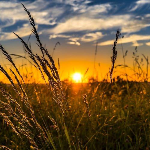 就農希望者が知っておくべき、農業を始めるためのポイントとは?
