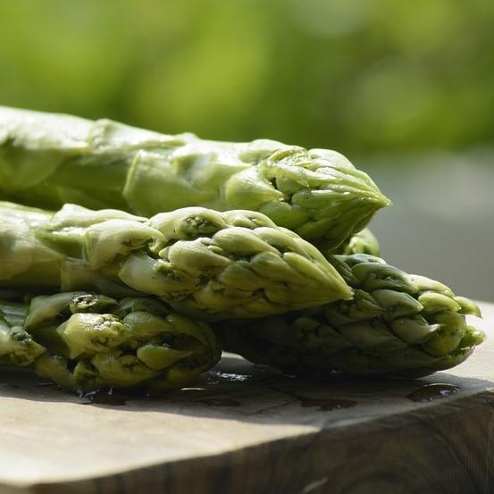 アスパラガスの茎枯病に有効な対策とは?防除のポイントと対処方法