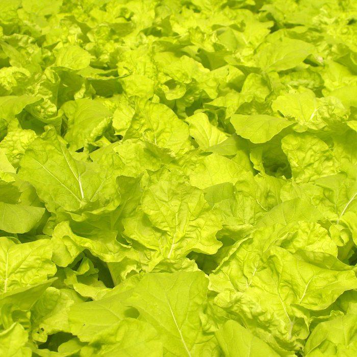 栽培技術の不足による作物への影響とは?設備導入で効率的な農業を