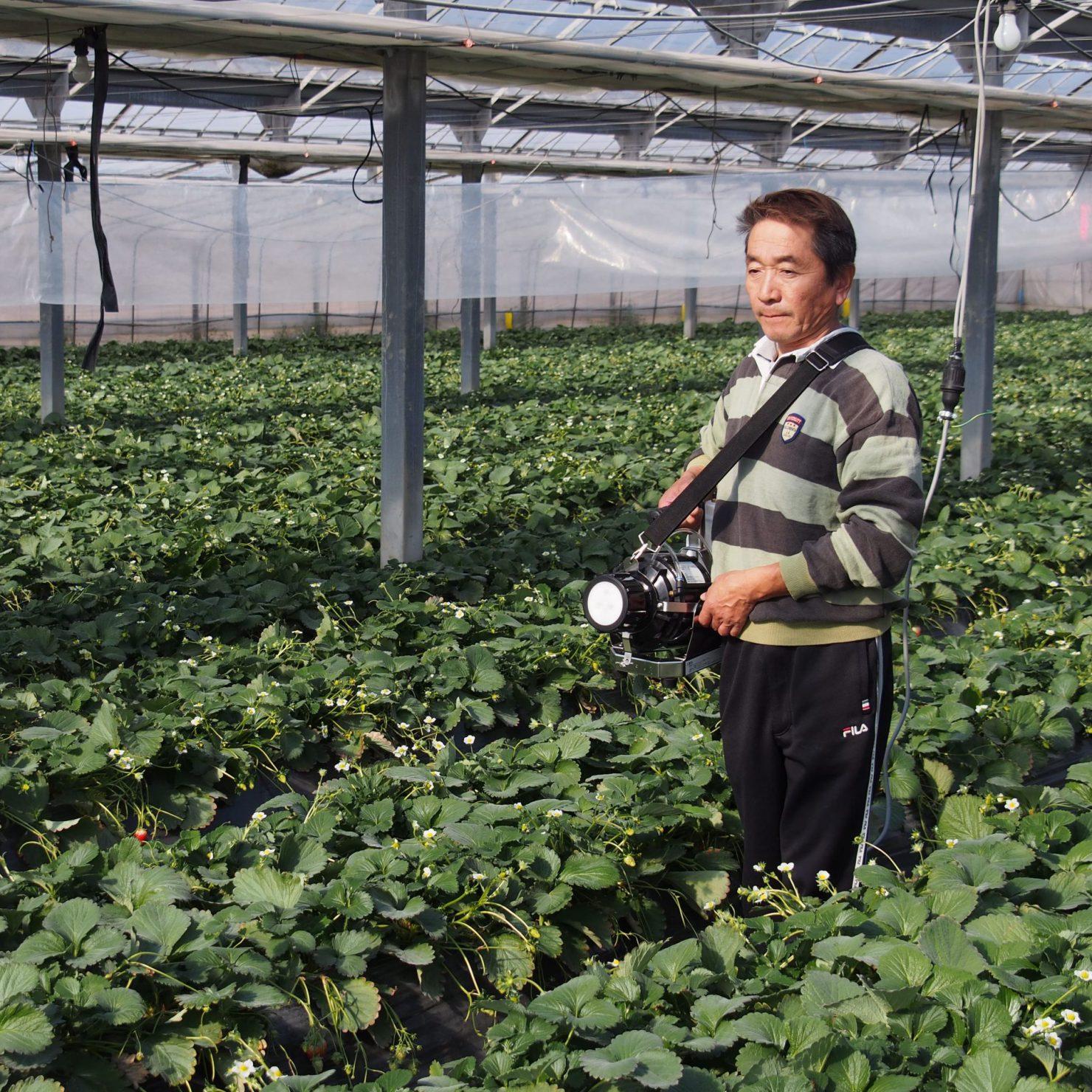 【栃木県いちご農家様】シーズン中に一度も動噴を使用せずに管理!モーターフォグの効果を実感