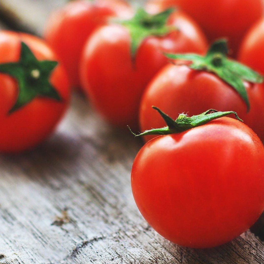 トマト疫病の基礎知識まとめ 発生時の対策と予防(防除)策とは?