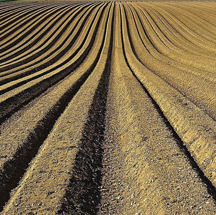 土壌改良の重要性とは?環境を整備する資材の種類と使用時の注意点