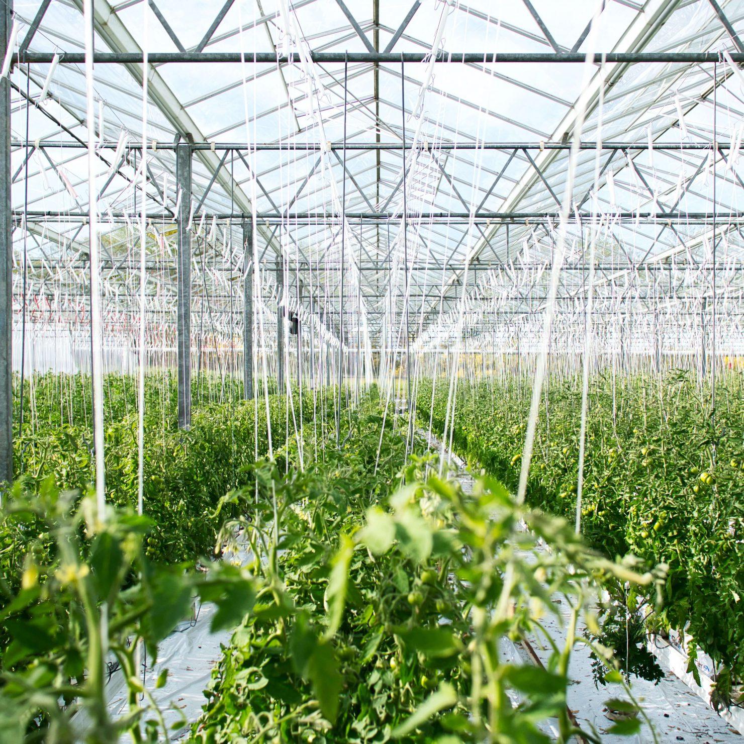 施設園芸農業とは?メリット・デメリットと始めるときのポイント