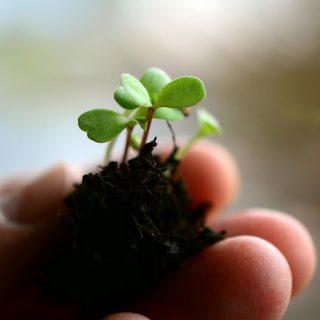 フルボ酸とは?腐植成分がもたらす植物と土壌への効果