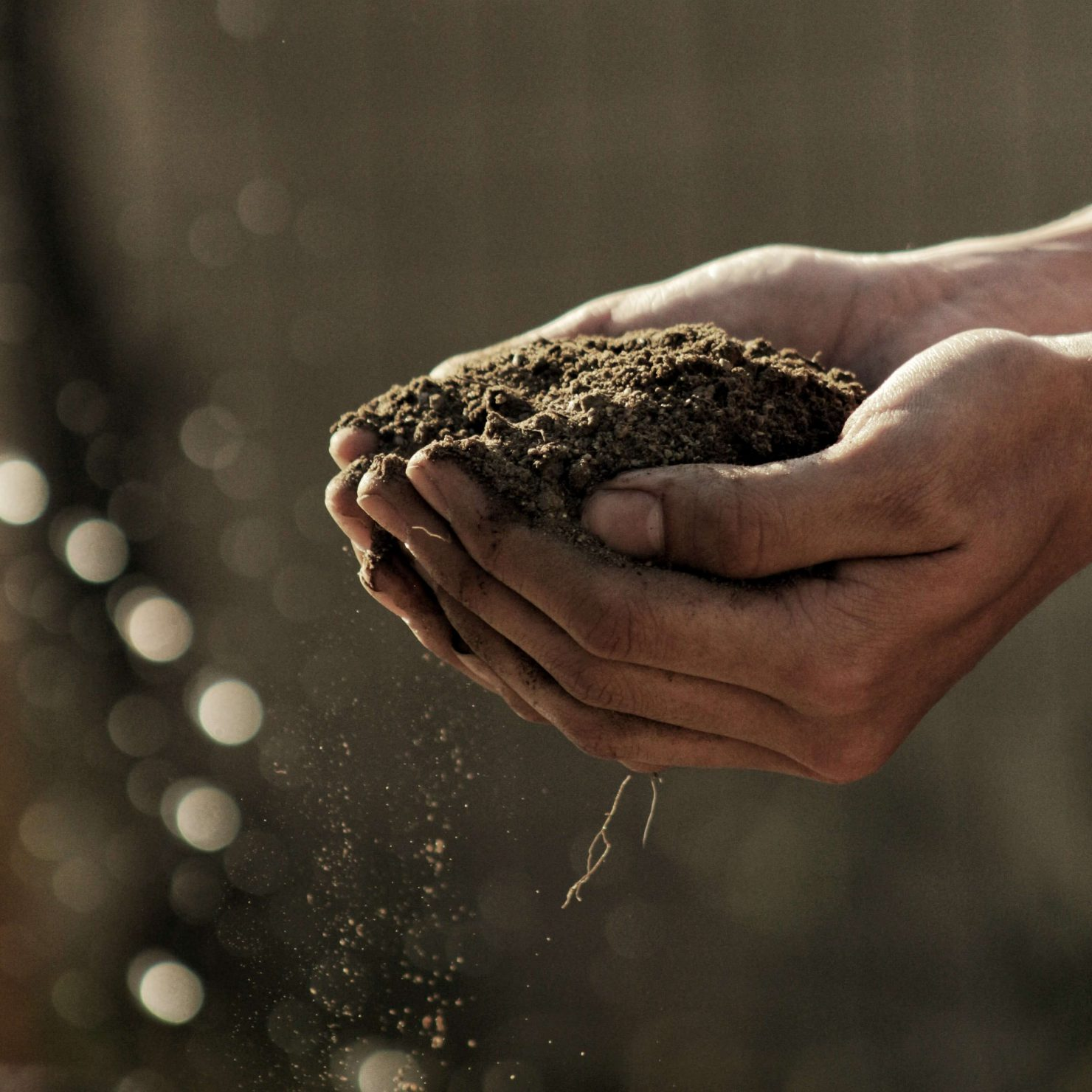 団粒構造とは? 植物が良く育つ土壌に必要な要素と土の作り方