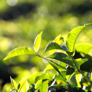 植物の栽培に必要な3つの栄養素と、成長を促進させる肥料の選び方