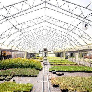 ビニールハウス栽培のメリット・デメリット│育てやすい作物は?