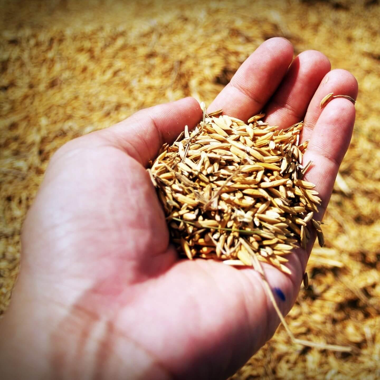 籾殻くん炭とは?土壌改良資材としての効果と作り方、使用方法