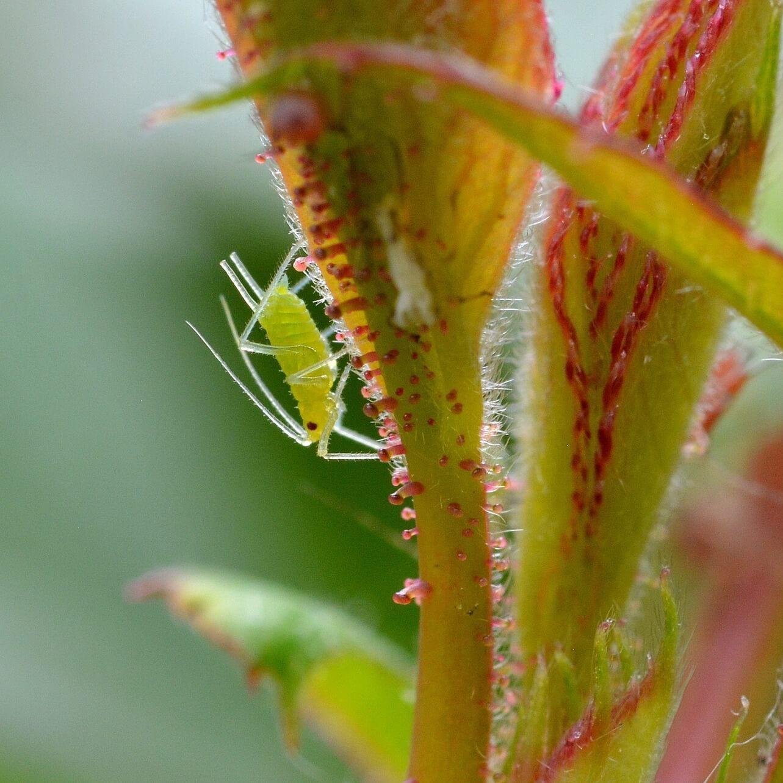 ビニールハウス栽培における害虫とは| 駆除のポイント