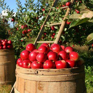 特別栽培農産物・有機農産物とは?わかりやすく解説!メリットとデメリット
