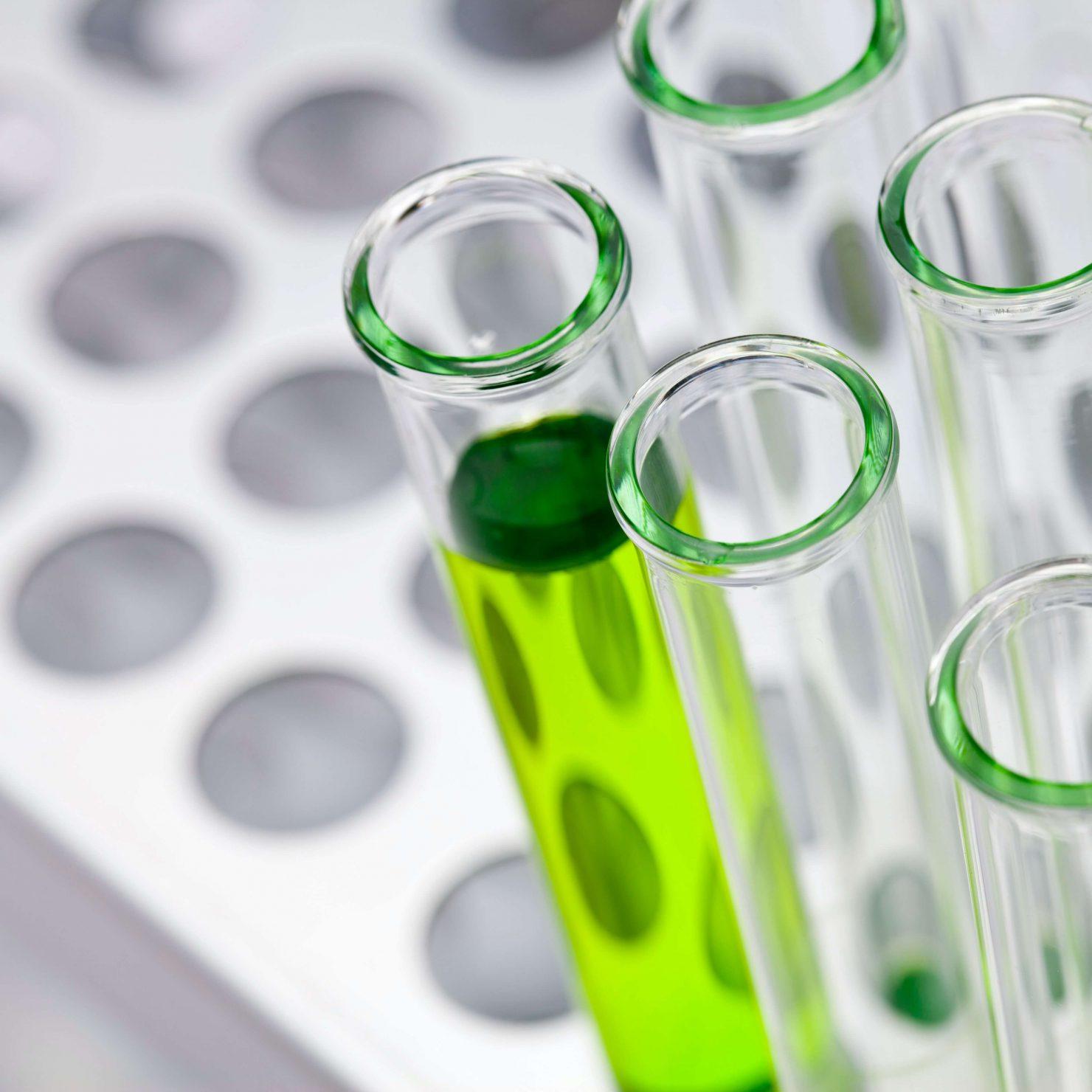 バイオスティミュラントとは?|農作物の生産量や品質を向上する資材