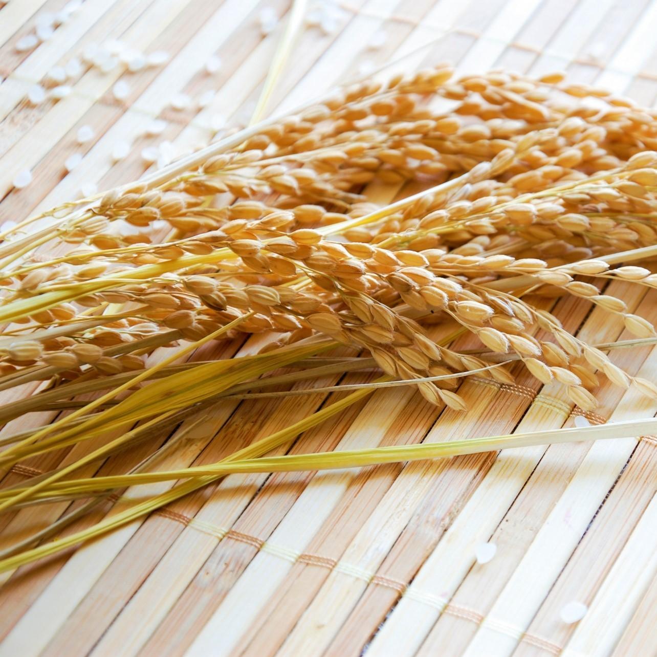 籾殻を処分する方法|籾殻有効活用を目指して