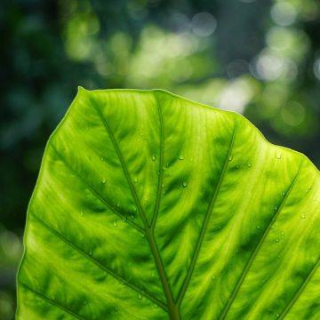 植物のアミノ酸吸収について