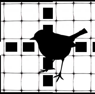 ブルーベリーを野鳥から守れ!鳥害と対策