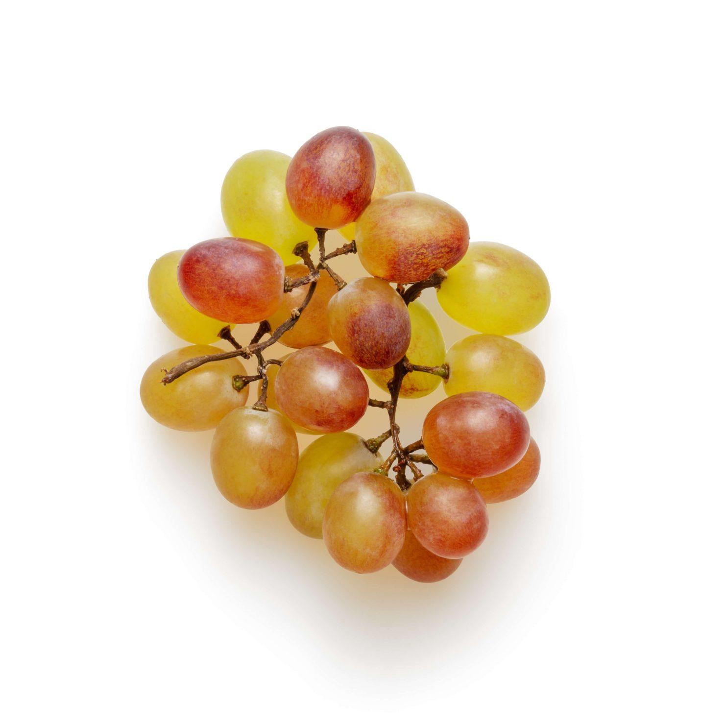 ブドウの剪定方法について-剪定方法や剪定時期を解説-