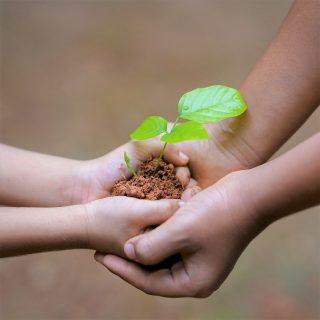 農業の救世主「アーバスキュラー菌根菌」とは|増やし方のヒントを紹介!